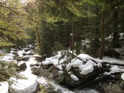Marten Creek in January