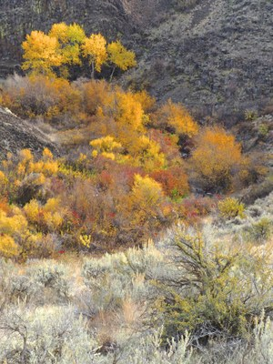 Day Hike - Cowiche Canyon