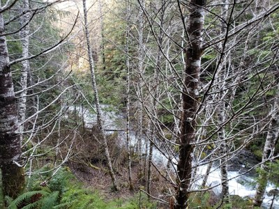Day Hike - Lower Big Quilcene