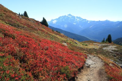 Day Hike - Yellow Aster Butte