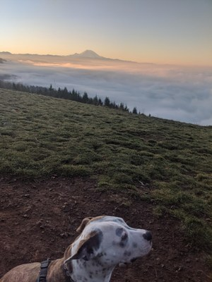 Frontcountry Trail Run - Poo Poo Point