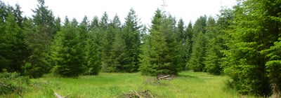 Stewardship - Davidson-Bergman Conservation Easement (Olympia)