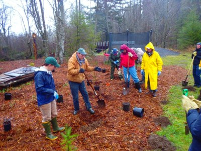Planting Event on McLane Creek with South Puget Sound Salmon Enhancement