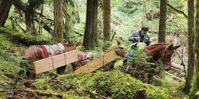 Stewardship - Olympic National Forest Office