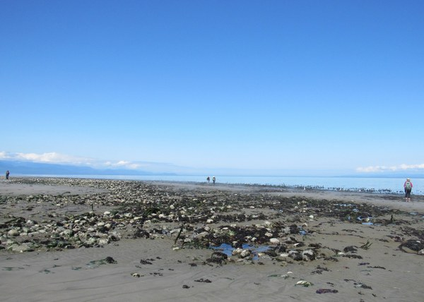 four people exploring tide pools