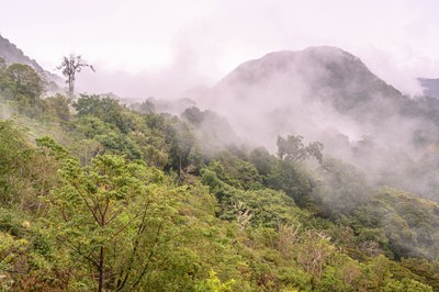 Bird and Hike the Cloud Forests of Western Panama