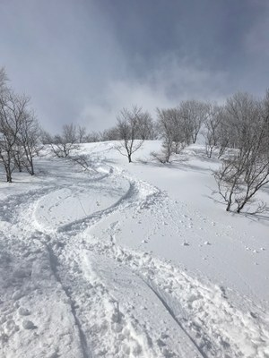 Ski/Snowboard on Hokkaido, Powder Capitol of the World