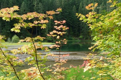 Greenwater Lakes and Vine Maple