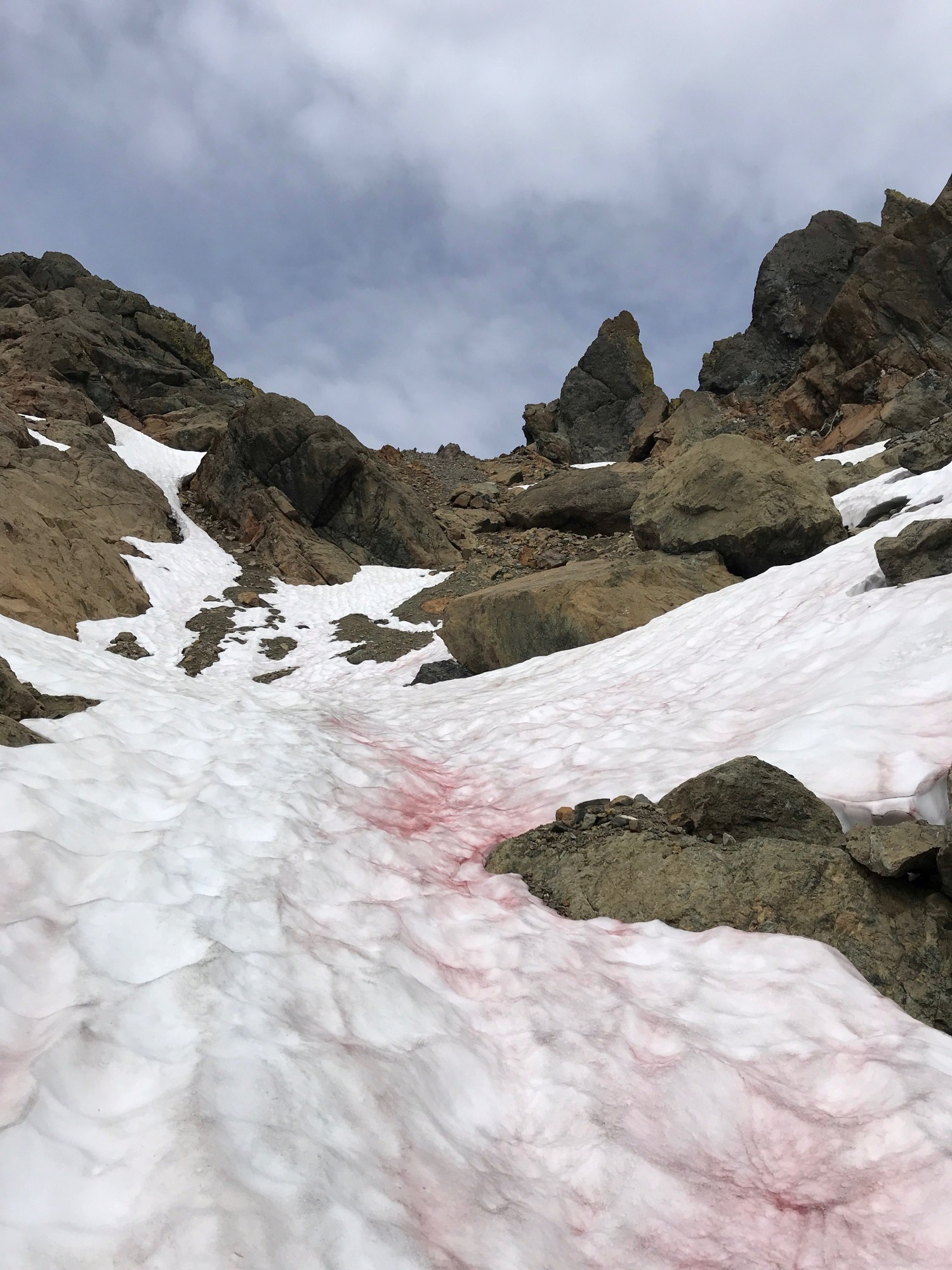 snow up to dog tooth.jpg