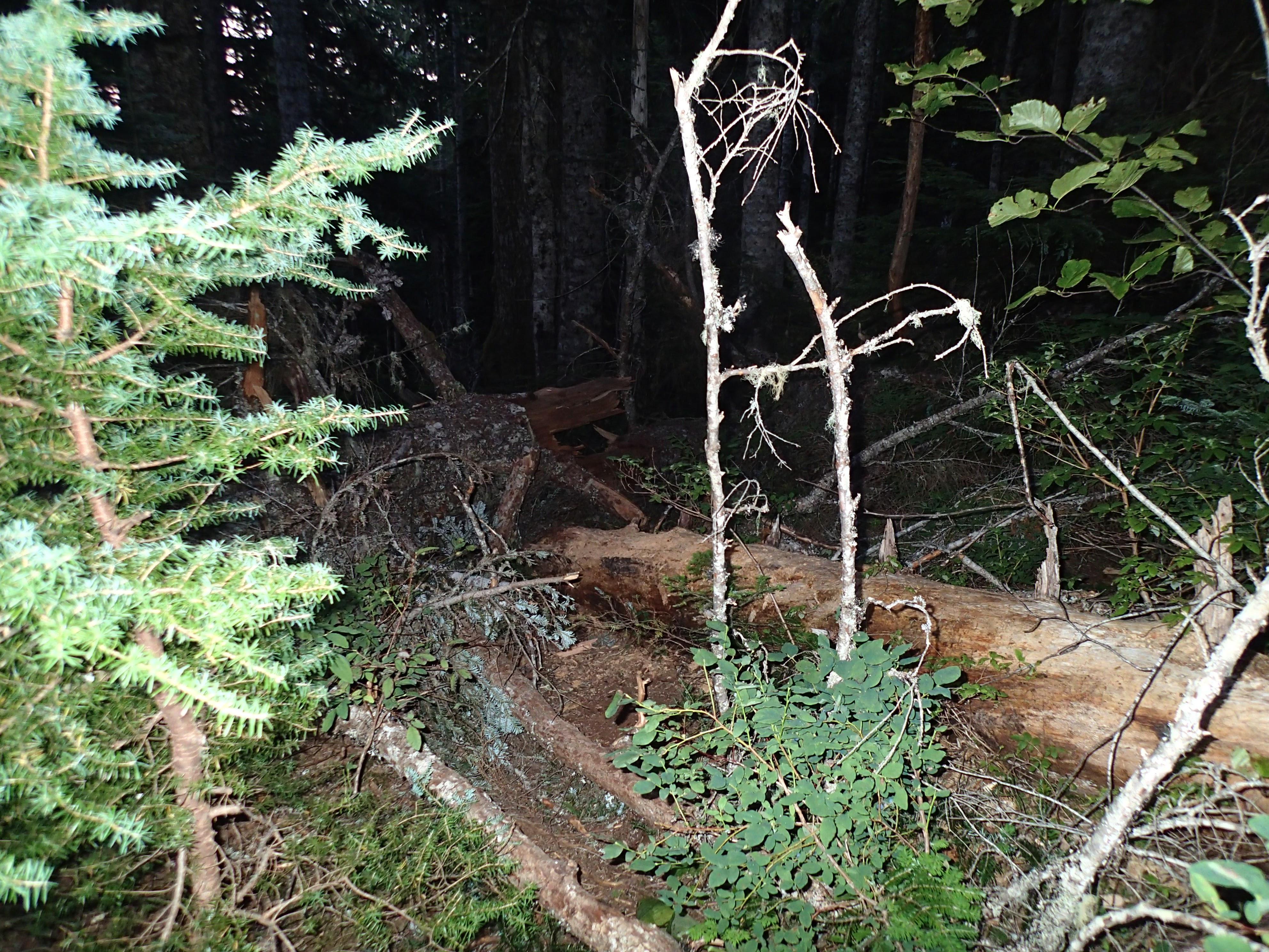 About the worse of the blowdown on Mount Washington.