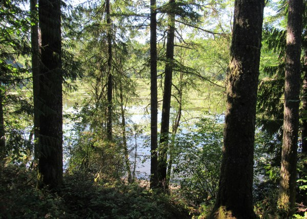 View of  a lake in a deep forest