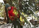 How To: Cut Your Own Christmas Tree in Our National Forests