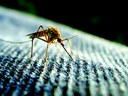 Essential Repellent: What You Need to Know to Survive the Battle of the Bug