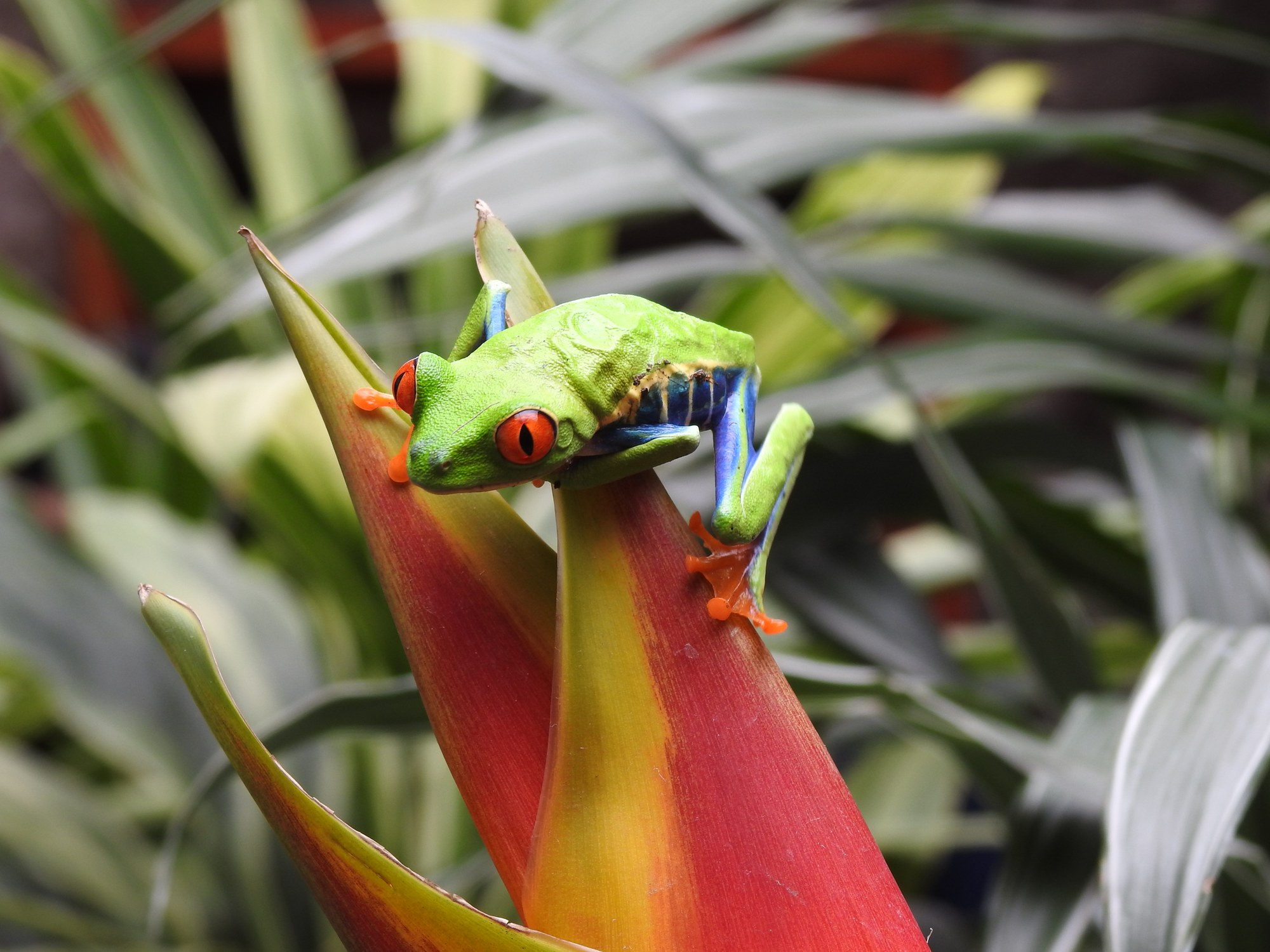 Global Adventures | Why Costa Rica Keeps Calling Me