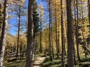 How To: See Golden Larches This Fall