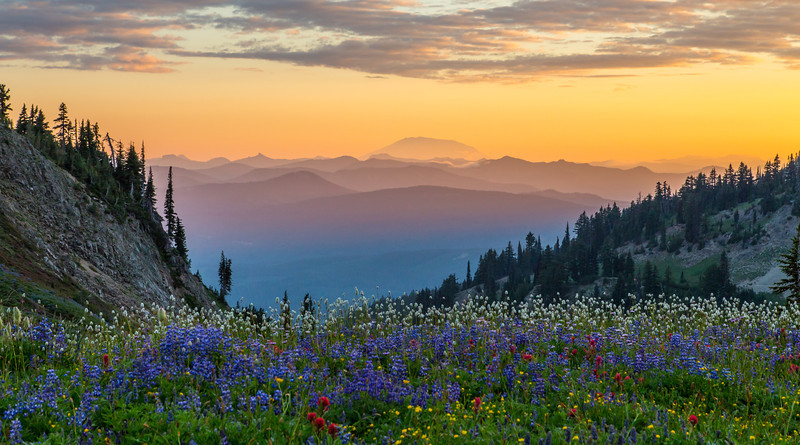 Mountain Flowers by Tim Nair