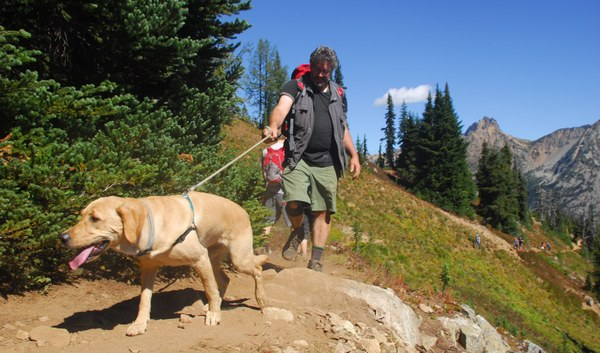 A lab on a hike on Maple Loop Pass. Photo by Tom O'Keefe.  2.jpg