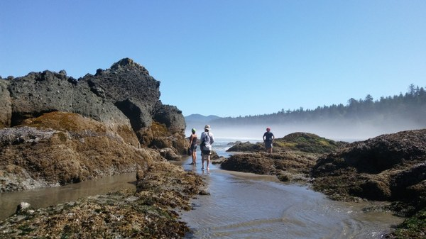 Beachgoers checking out the tide pools and sea stacks at Point of Arches.jpg