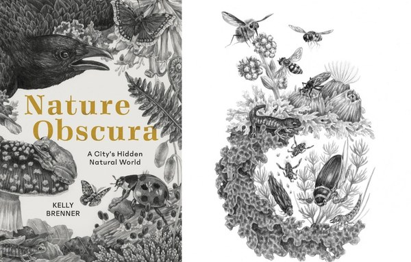 Blog - Nature Obscura + illustration.jpg