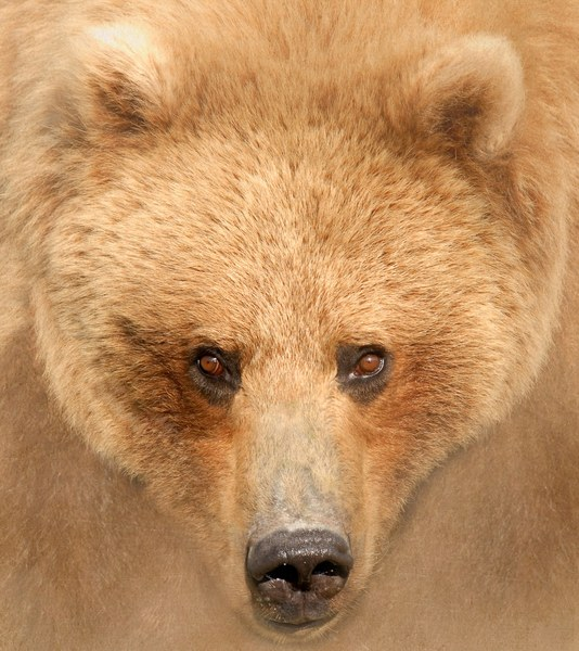 BrownBear_Impression5200-cropped.jpg
