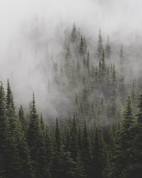 Moody Olympic forest (1).jpg