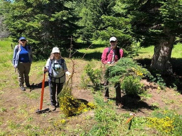 Mt. St. Helen's Scotch broom removal team. Photo by Jim French..jpg