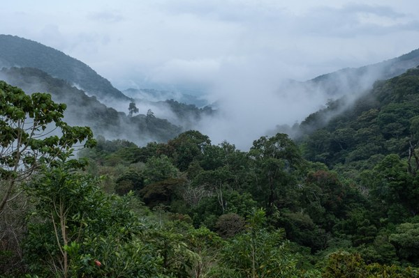 The Clouds-Mount Totumas Cloud Forest-Volcan-3022.jpg