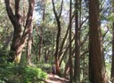 Top Nature Hikes in Tacoma