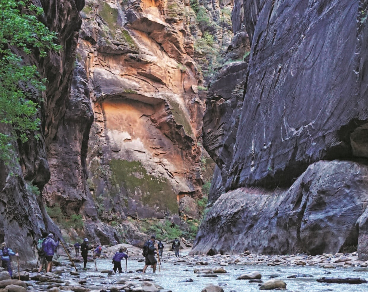 Zion National Park's Must-See Sights & Activities