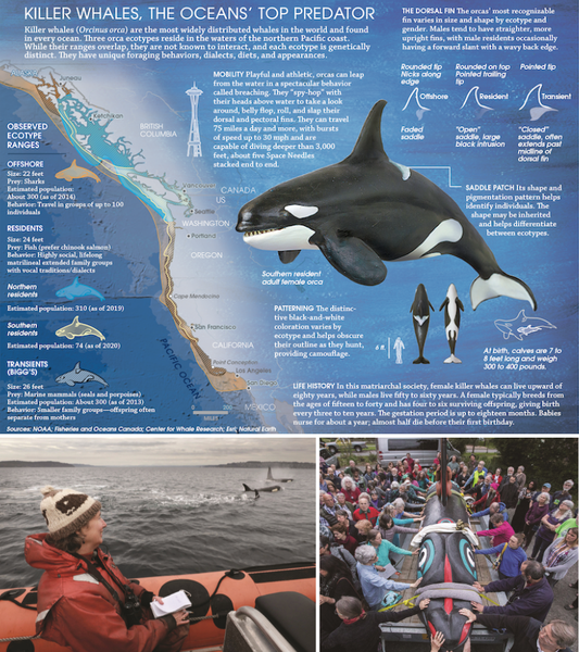 orca-collage.png