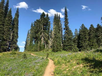 Introduction to Trail Running: Backcountry - 2020