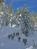 Basic Snowshoeing Course   - Foothills - 2016