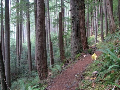 Introduction to Hiking - Tunnel Creek