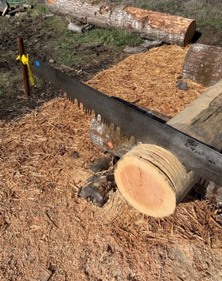 Crosscut Saw Practice and Development - Private Residence