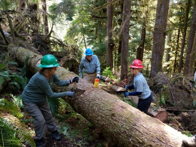 Crosscut Saw Training - Brown Creek Campground