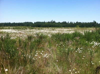 Birds of the Northwest: Field Trip - Nisqually National Wildlife Refuge