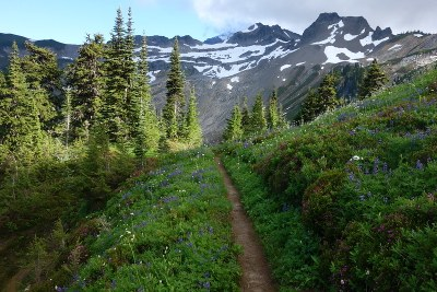 CHS 1 Hike - Pacific Crest Trail: Stevens Pass to White Pass