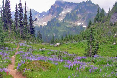 CHS 2 Hike - Pacific Crest Trail: White Pass to Chinook Pass