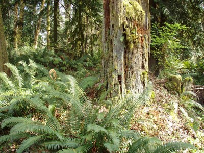 Field Trip 1 - Seattle Naturalists Intro Natural World Course - Shady Lane & Staircase Rapids